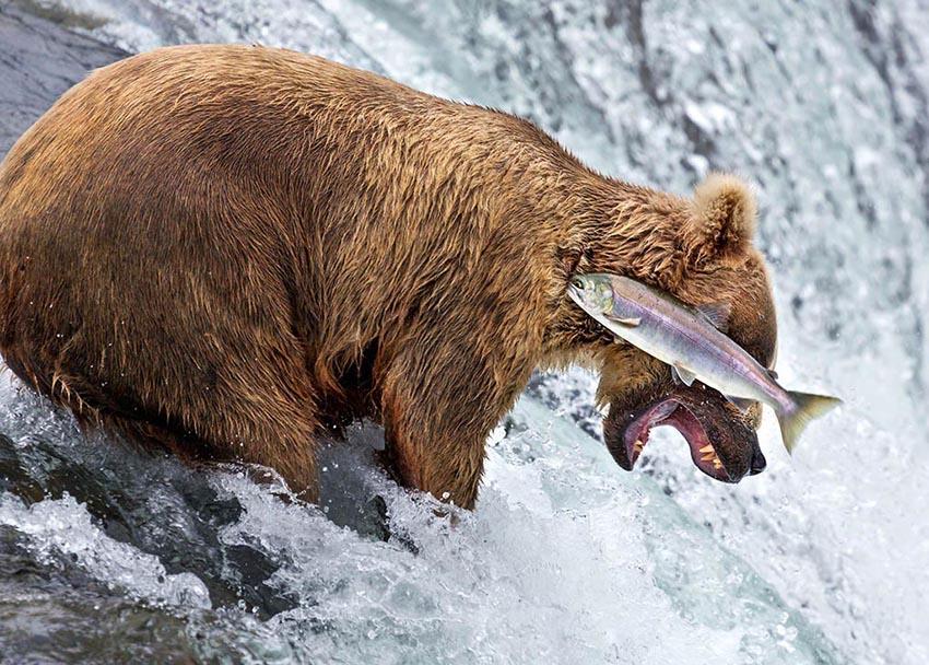 Rob Kroenert comedy wildlife photography