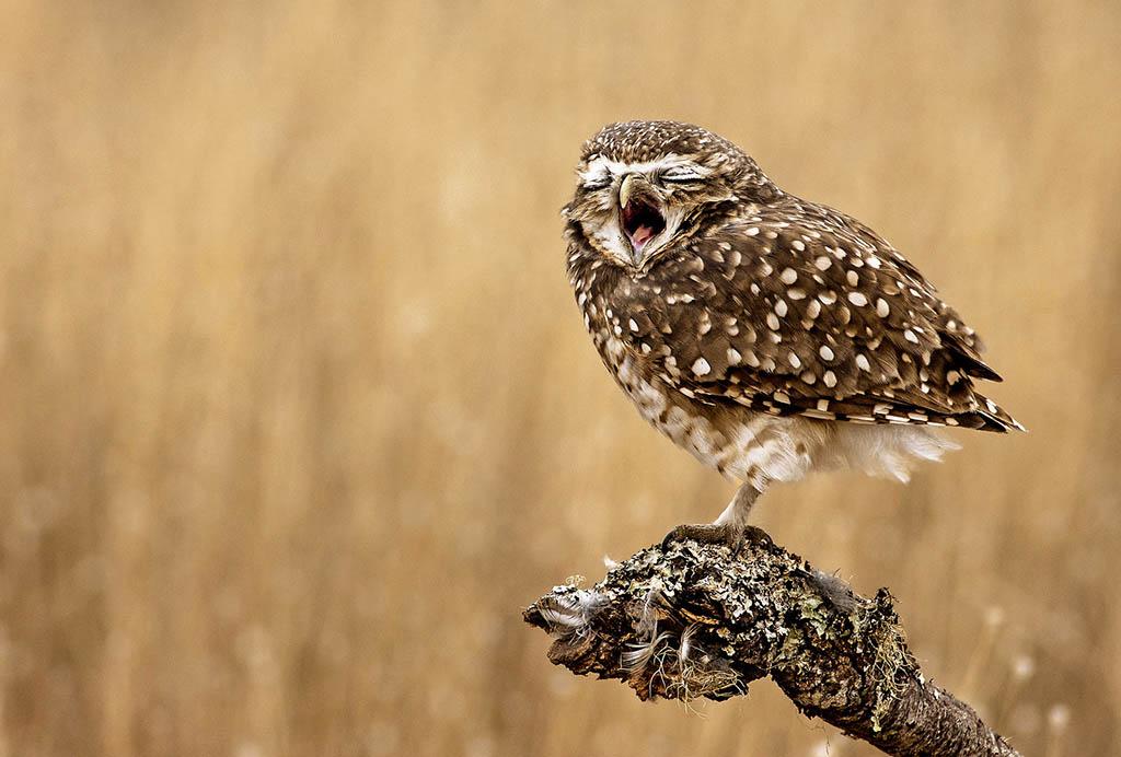 Dream comedy wildlife photography