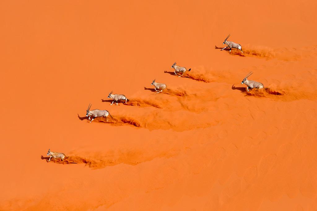 Desert Choreography