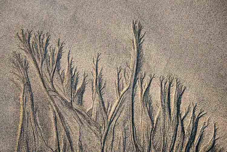 Zandbomen op het strand in Fuerteventura