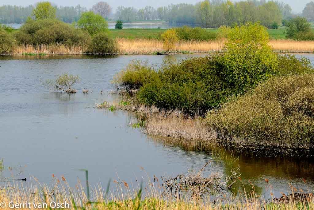 Gebieden fotograferen Natuurfotografie.nl:Waaluiterwaarden tussen Tiel en Waardenburg