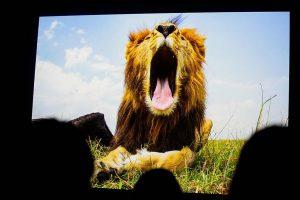 Beedschermfoto presentatie Will Burrard Lucas
