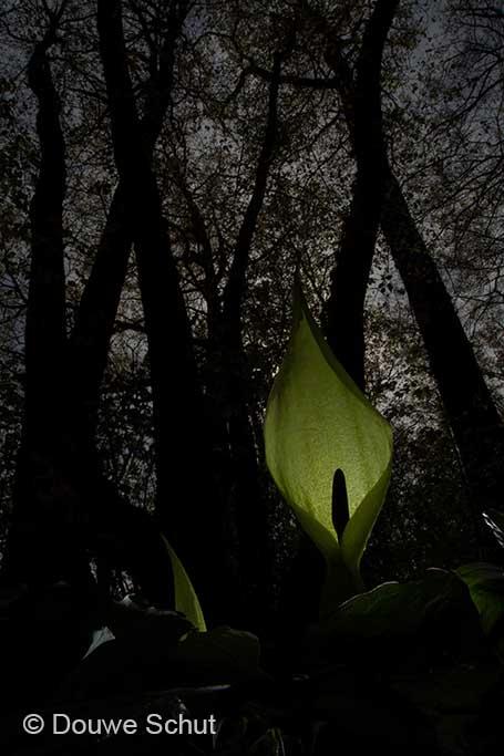 01-planten-douwe-schut