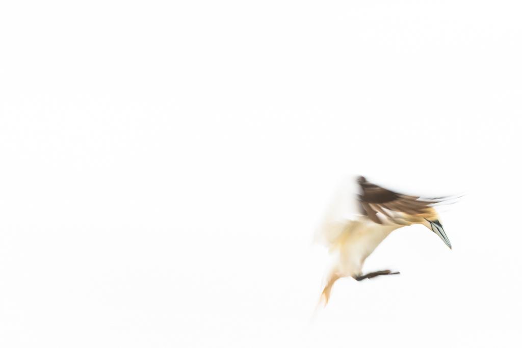 Aanvliegen (lange sluitertijd, high key, compositie)