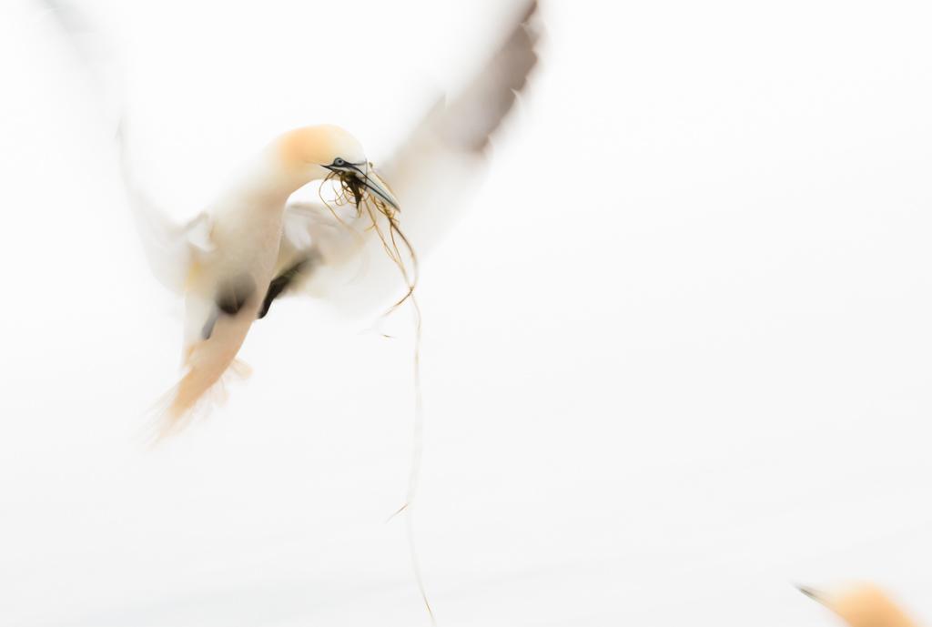 Aanvliegen (lange sluitertijd, high key en compositie)