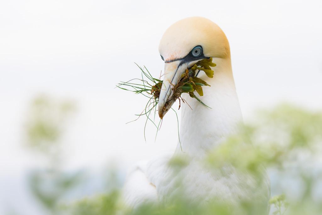 Nestmateriaal thuisbrengen (high key, door vegetatie fotograferen)