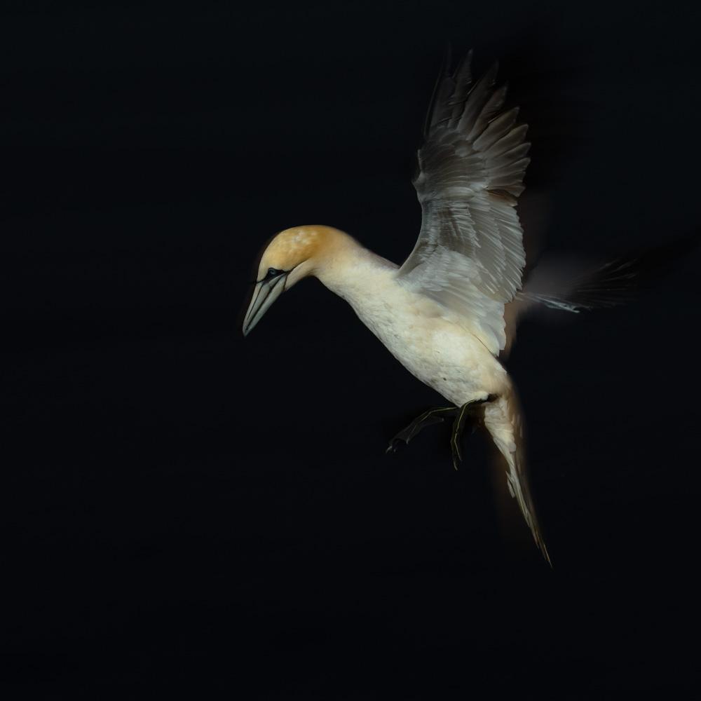 Aanvliegen (flits)