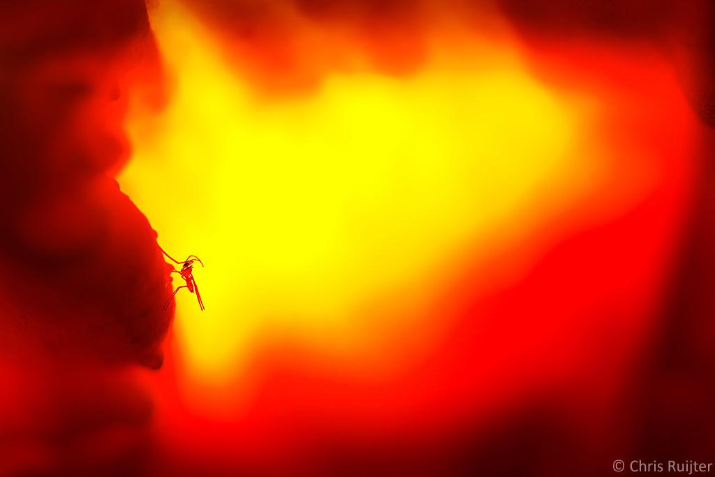 Bij een flinke Zwavelzwam kun je als het ware ín de paddenstoel kruipen. Door middel van een losse flitser bovenop de zwam kun je hem laten oplichten als een lavalamp.