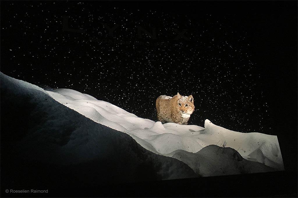 Laurent Geslin - Oog in oog met de lynx