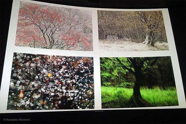 Kristel Schneider - Variations in Trees