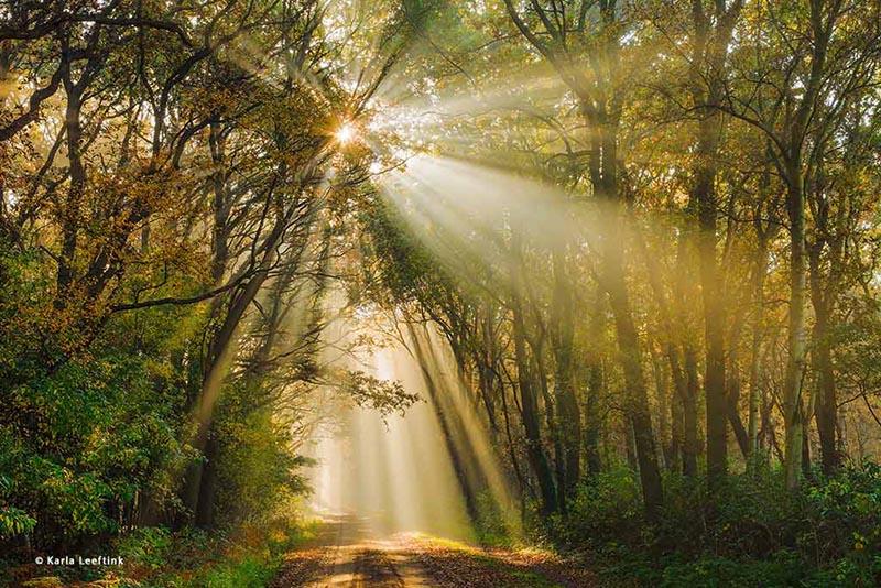 Gouden zonnestralen in herfstbos-