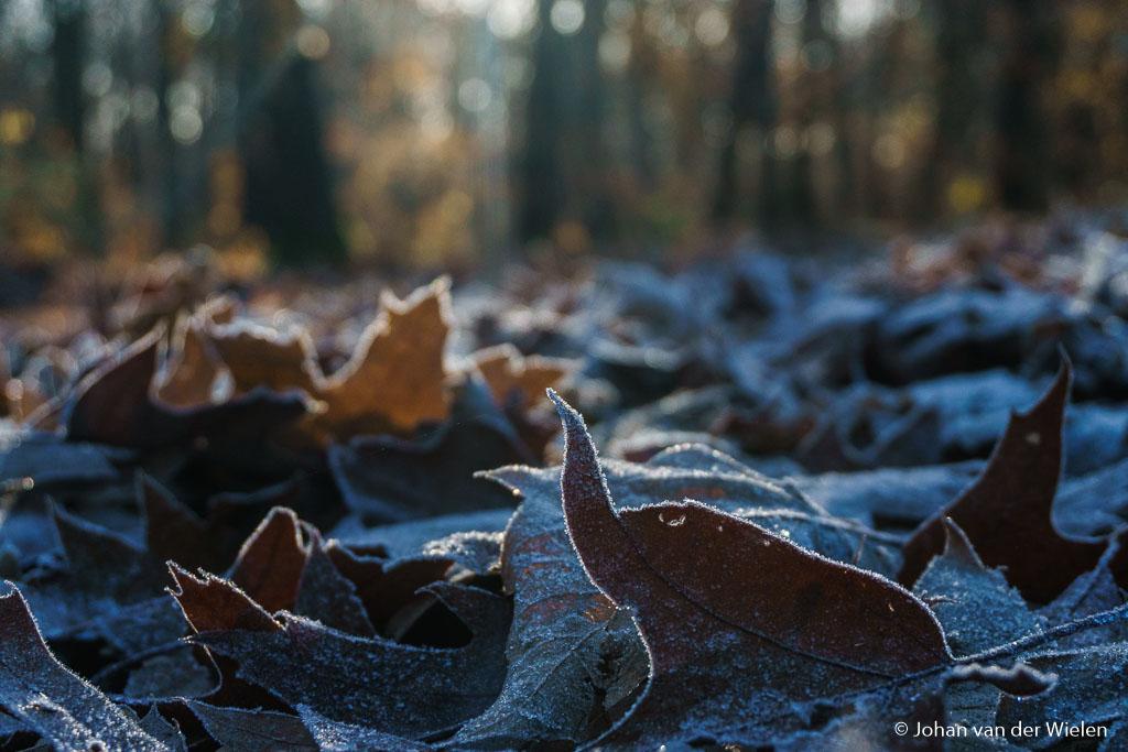 maandag 28-11, 10:38: rijp in het bos! mooi hoe het licht door de bomen schijn als achtergrond van het berijpte blad