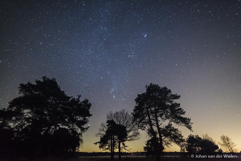 Dinsdag 29-11, 1:09: orion wordt bijna overstraald door het geweld aan sterren boven de bomen. De Pleïaden stekken dapper af.