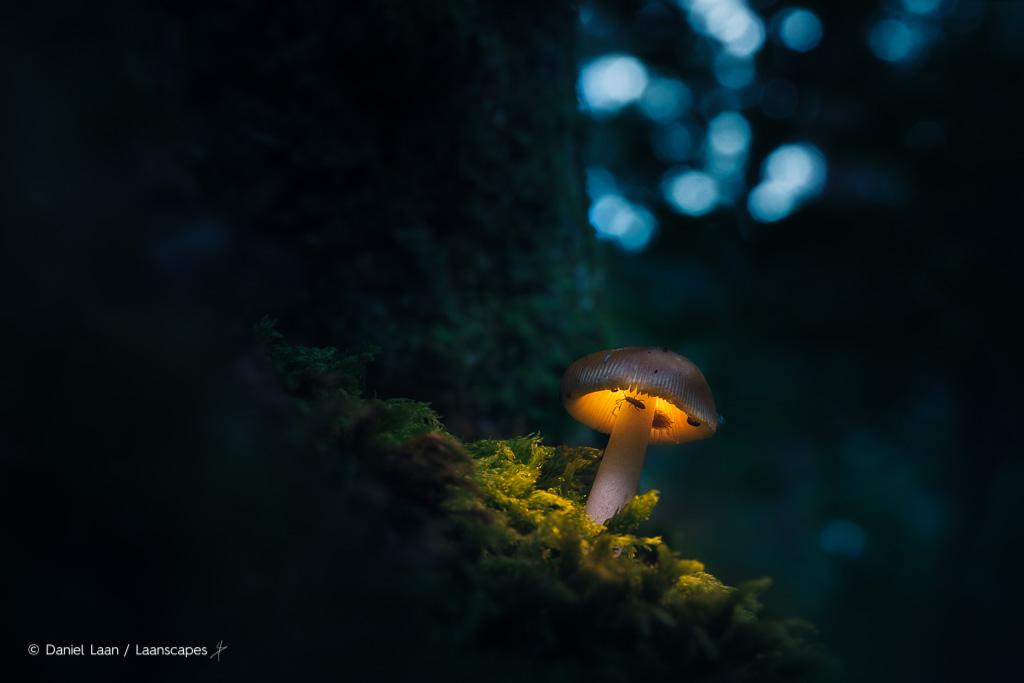 lichtgevende paddestoelenfotografie