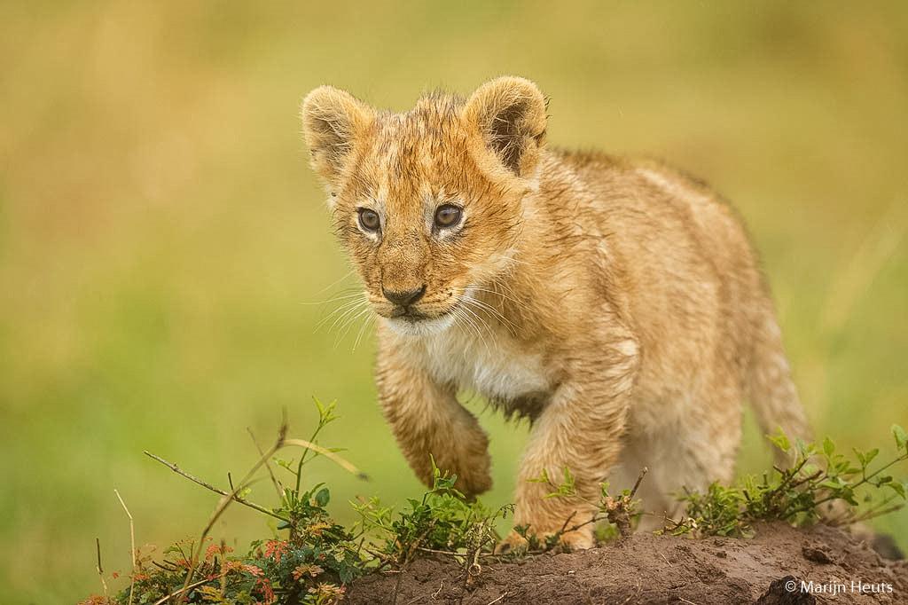 Kinderen zijn gek op jonge dieren, en sommige jonge dieren zijn gek op andere jonge dieren. #Nice and juicy