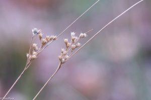 Wat dode sprietjes kunnen toch een mooi beeld geven door hun vorm in combinatie met een zachtgekleurde achtergrond.  - Fotograaf: Ron Poot