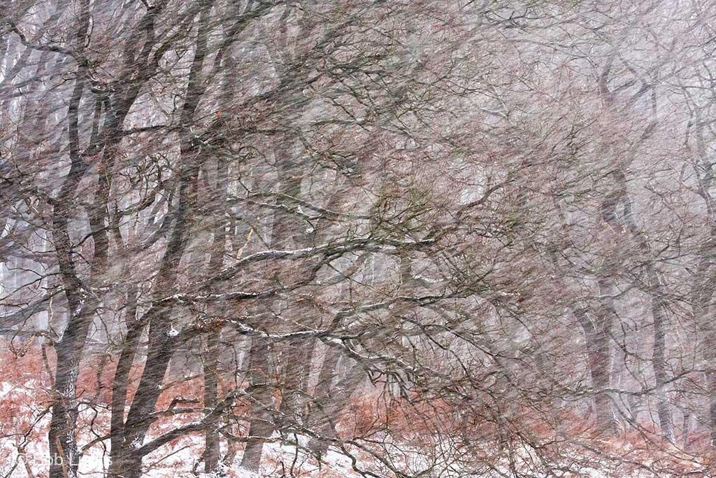 Met een wat langere sluitertijd vervagen de sneeuwvlokken tot strepen.