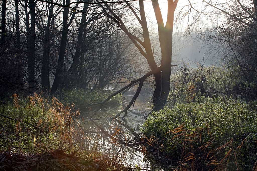 Gebieden fotograferen Natuurfotografie.nl:Biesbosch