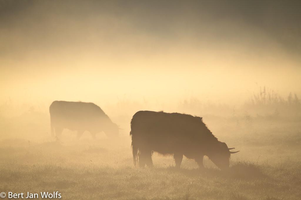 Gebieden fotograferen Natuurfotografie.nl:Gasterse Duinen