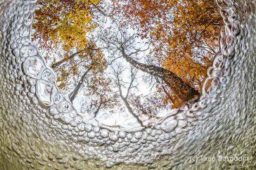 Under water autumn view