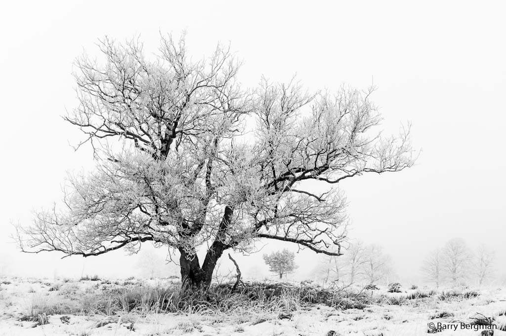 De foto is genomen met een sony a550 met een 35 mm lens met ISO 200 en f3.5. Ik vraag me af op de boom los genoeg staat van de lucht en van het groepje bomen op de achtergrond, ondanks een groot diafragma. De foto is omgezet naar een high-key zwart/wit foto.