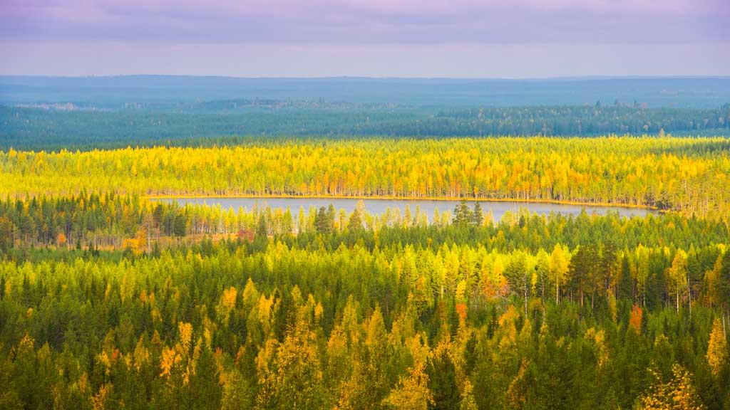 De Finse, kortdurende, herfst, de Ruska