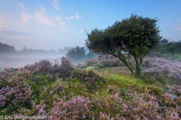 De Groot Heide