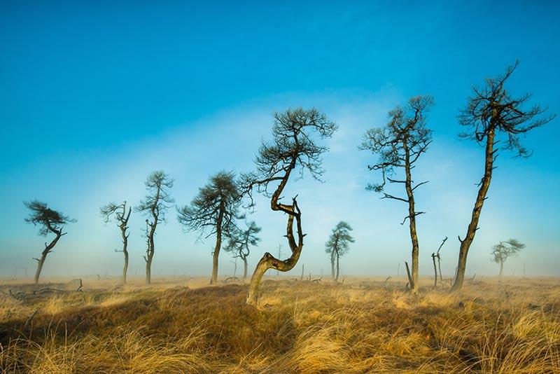 Noir Flohay op de Hoge Venen, de beroemde skeletbomen onder een mistboog