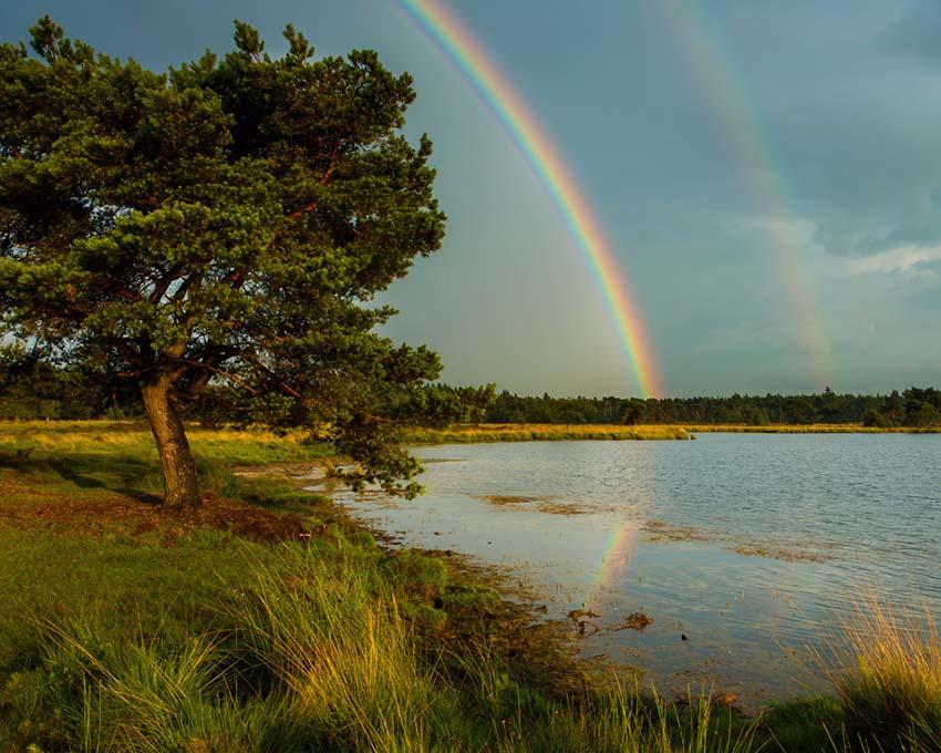 Na een flinke regenbui brak nog even de zon door, die een prachtige dubbele regenboog boven het Starven op de Strabrechtse Heide schilderde