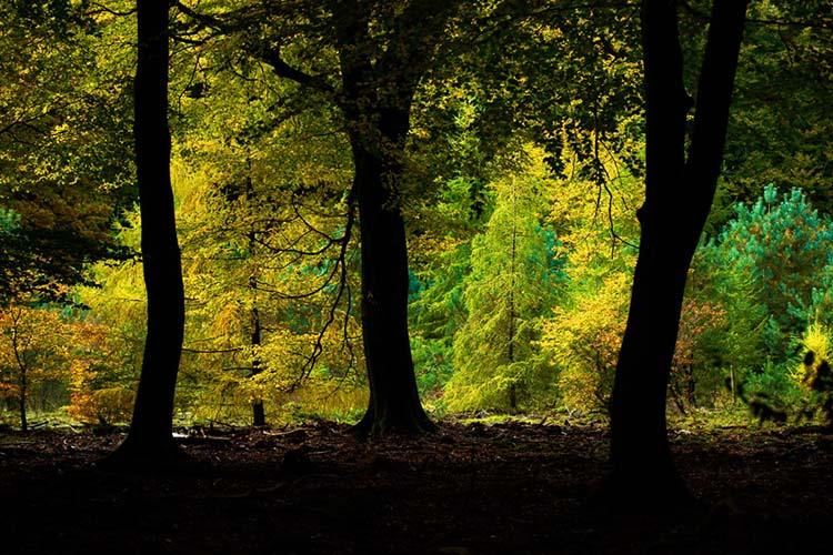 De kleuren van de herfst, gezien vanuit de donkere diepten van het Speulderbos