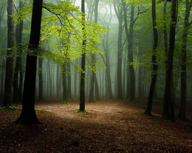 De zon breekt onverwacht door, op een grijze ochtend in het Speulderbos, en zet een open plek heel even in een magisch licht