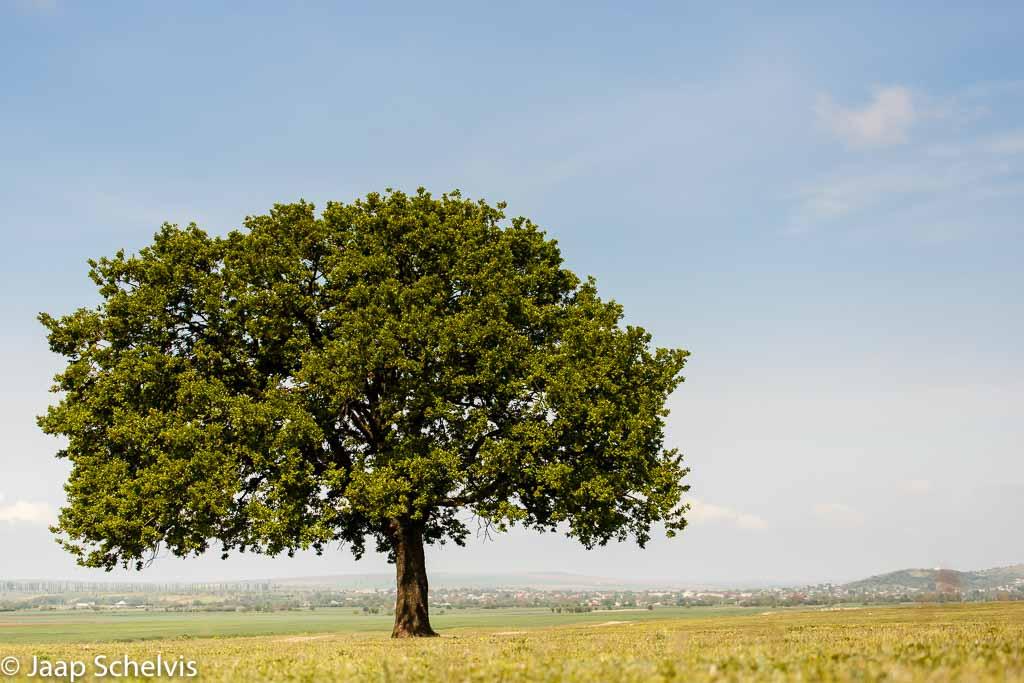 Photo Challenge 'Een enkele boom'