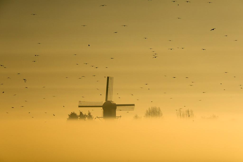 Molen-in-de-mist