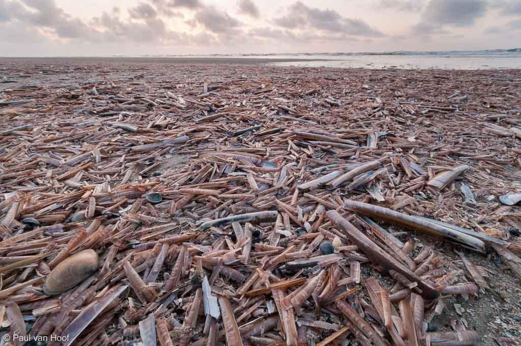 Scheermessen op strand